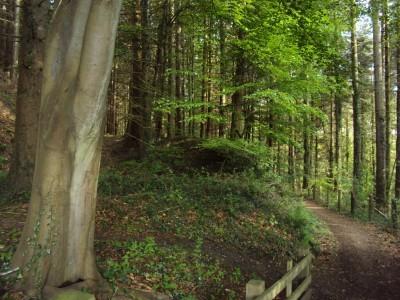 Lydbrook Walk