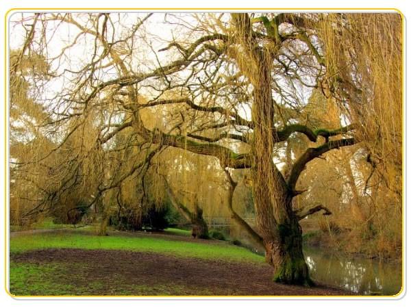 barnwood-arbouretum.jpg